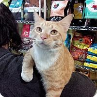 Adopt A Pet :: KARL - Raleigh, NC