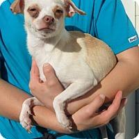Adopt A Pet :: Ginger (Cocoa Center) - Cocoa, FL