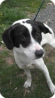 Hound (Unknown Type) Mix Dog for adoption in Waldorf, Maryland - Glenda #388