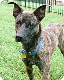 Adopt A Dog Nashville Tennessee
