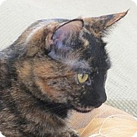Adopt A Pet :: Lorna - Los Angeles, CA
