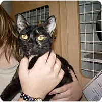 Adopt A Pet :: Tikki - Jacksonville, FL