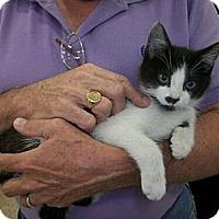Adopt A Pet :: Milo - Reston, VA