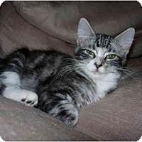 Adopt A Pet :: Leia - Davis, CA