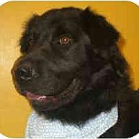Adopt A Pet :: Major URGENT - Concord, CA