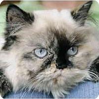 Adopt A Pet :: Lady Gucci - Columbus, OH