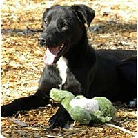 Adopt A Pet :: ELVIS - Windham, NH