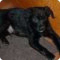 Adopt A Pet :: Fred - Denver, CO