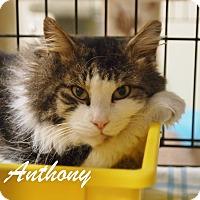 Adopt A Pet :: Anthony - Ocean City, NJ