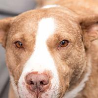 Adopt A Pet :: Chance - Daleville, AL
