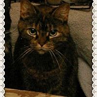 Adopt A Pet :: Gloria - Island Heights, NJ