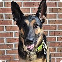 Adopt A Pet :: Zeke - Gretna, NE