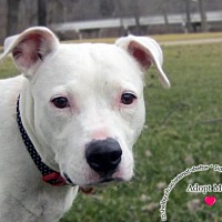Adopt A Pet :: Penny - Sidney, OH
