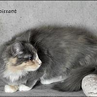 Adopt A Pet :: Croissant - Trexlertown, PA
