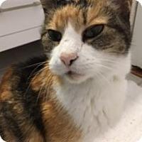 Adopt A Pet :: Madeline - Garland, TX