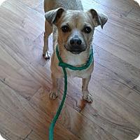 Adopt A Pet :: Tank - Ardmore, OK