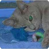 Adopt A Pet :: Petey - Arlington, VA