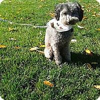 Adopt A Pet :: Creature - Puyallup, WA