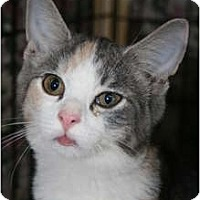 Adopt A Pet :: Butterball - Frederick, MD