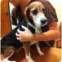 Adopt A Pet :: Abby June - Phoenix, AZ