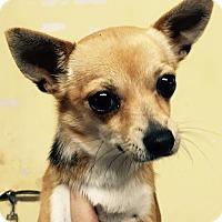 Adopt A Pet :: Gabriela - Orlando, FL