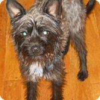 Adopt A Pet :: Abby - dewey, AZ