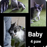 Adopt A Pet :: Baby - North Richland Hills, TX