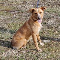 Adopt A Pet :: Sadie - Parsons, KS