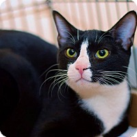 Adopt A Pet :: Luke - East Brunswick, NJ
