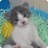 Adopt A Pet :: Drax - Helotes, TX
