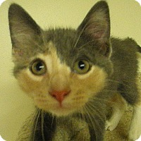 Adopt A Pet :: Carina - Milwaukee, WI