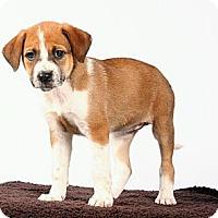 Adopt A Pet :: Cookie - Beaumont, TX