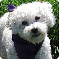 Adopt A Pet :: Howie - Encinitas, CA
