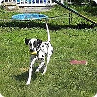 Adopt A Pet :: Bandit - Middletown, PA