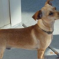 Adopt A Pet :: Freddie - Monrovia, CA