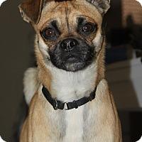 Adopt A Pet :: Bacon - Scottsdale, AZ