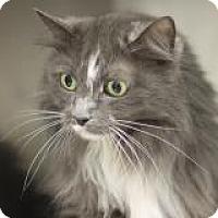 Adopt A Pet :: Torrey - El Cajon, CA
