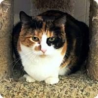 Adopt A Pet :: Chanel - Edmond, OK