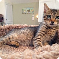 Adopt A Pet :: HAPPY aka TRIXIE - Hamilton, NJ