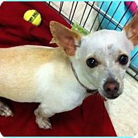 Adopt A Pet :: Dempsey - Phoenix, AZ