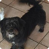 Adopt A Pet :: Teddy - Homer Glen, IL