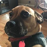 Adopt A Pet :: Benson - Spring Lake, NJ