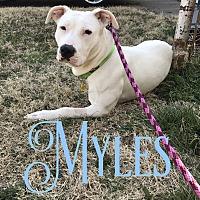 Adopt A Pet :: Myles - Cheney, KS