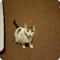 Adopt A Pet :: Katie (Phyllis litter) - Baltimore, MD