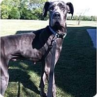 Adopt A Pet :: Smurfette - Oak Ridge, TN