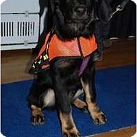 Adopt A Pet :: Lucy - Surrey, BC