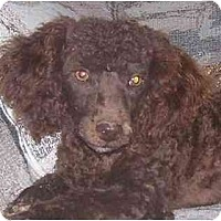 Adopt A Pet :: Bentley - Chandler, IN