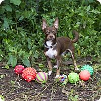 Adopt A Pet :: Beso - Calgary, AB
