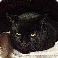 Adopt A Pet :: King Kong - Byron Center, MI