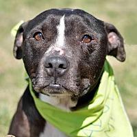 Adopt A Pet :: Jack - Mt. Vernon, IN